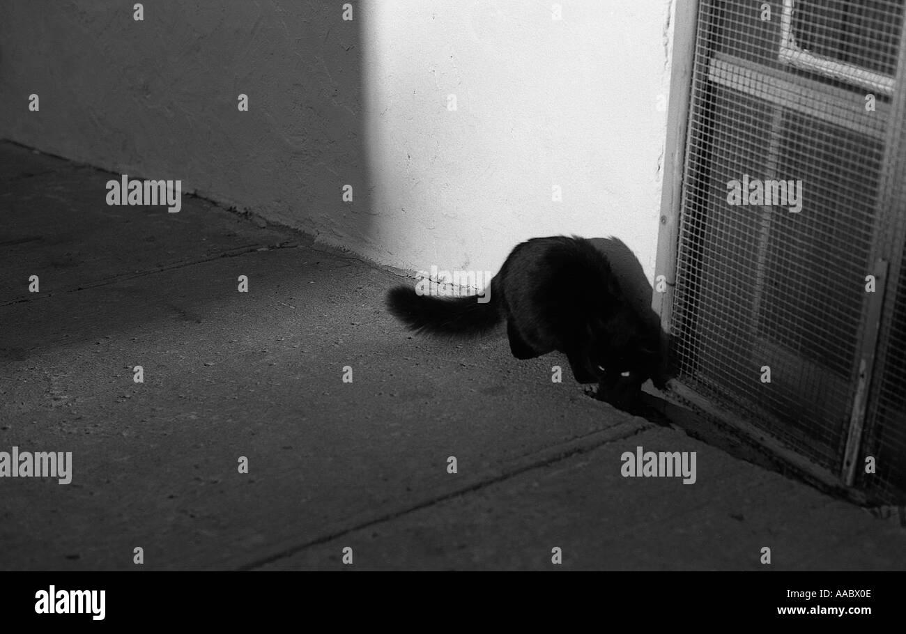 Un chat noir dans une rue de la ville de Québec Canada la photographie noir et blanc Photo Stock