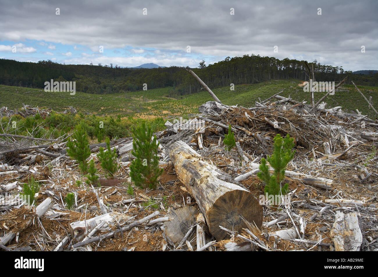 La déforestation l'exploitation forestière nr Yolla Cam Valley du nord ouest de la Tasmanie en Australie Photo Stock