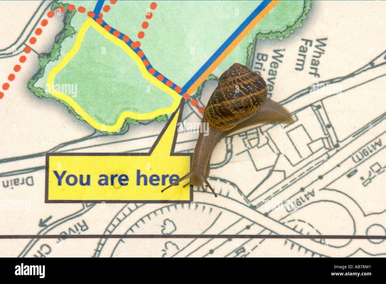Escargot Helix aspersa la carte afficheur North Meadow Réserve naturelle nationale Cricklade Wiltshire Photo Stock