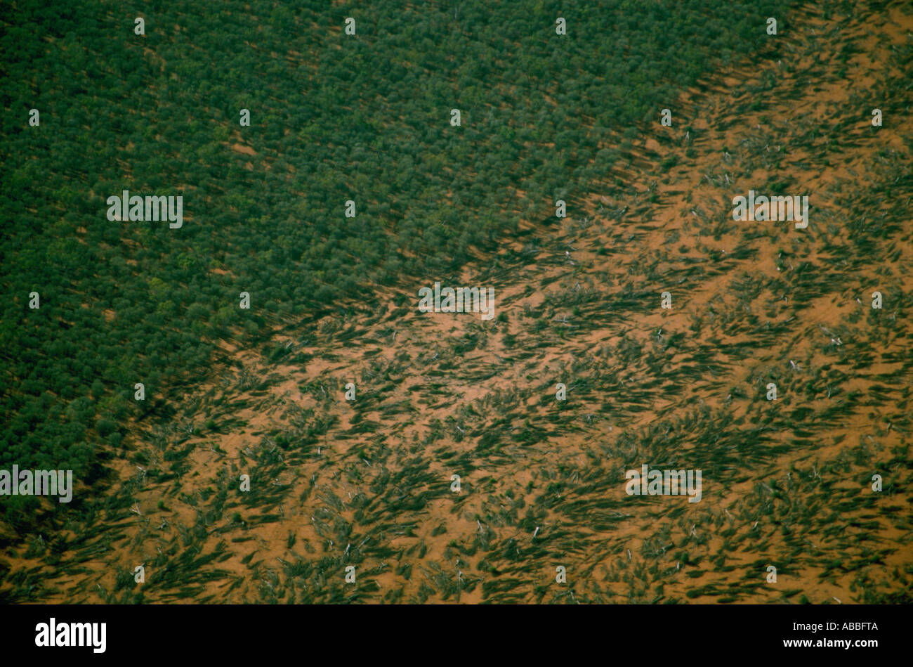 La déforestation dans le Queensland Photo Stock