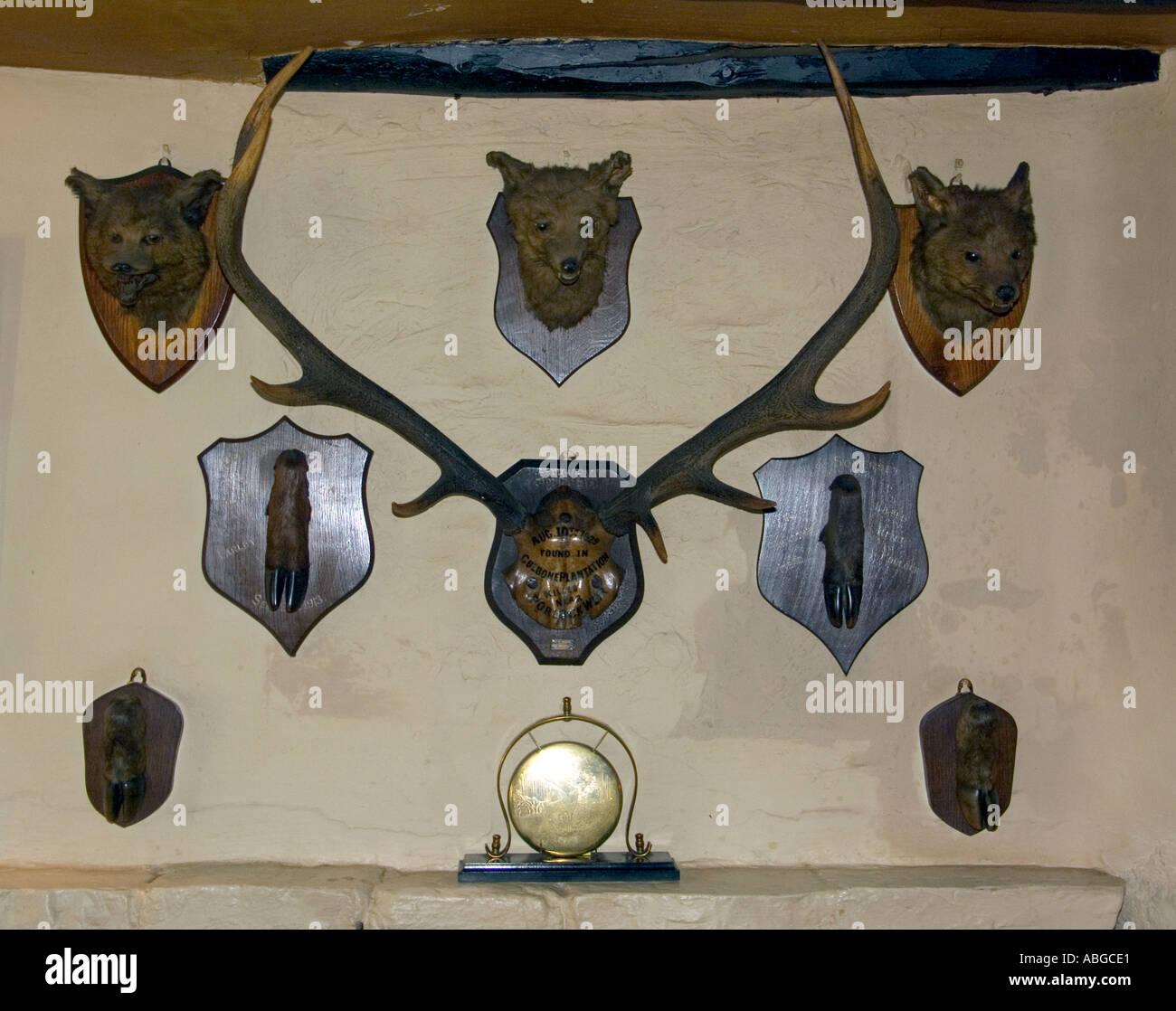 monté sur des trophées de chasse bois de cerf rouge chefs fox sabots