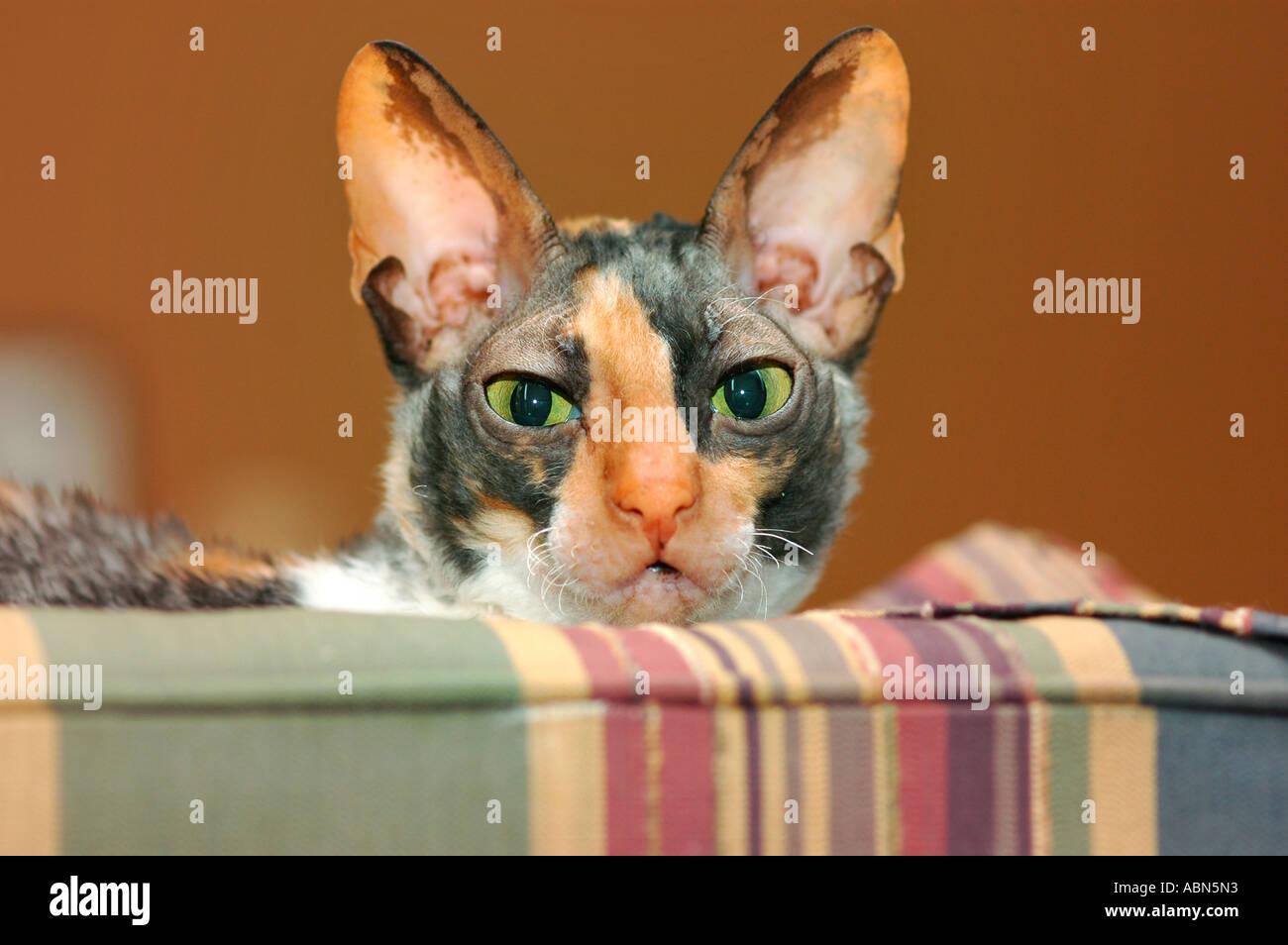 noir chatte Atlanta