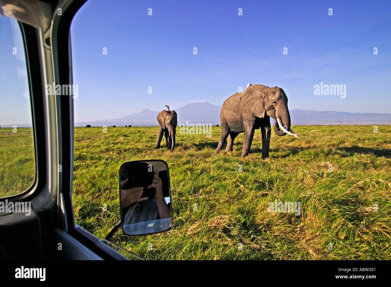 Tourisme à la fenêtre de la voiture d'éléphants au Parc national Amboseli au Kenya Photo Stock