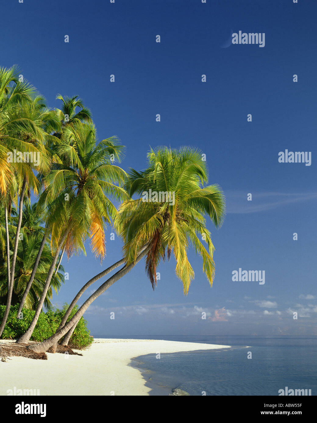 - MV Maldives : plage le long de l'Océan Indien Photo Stock