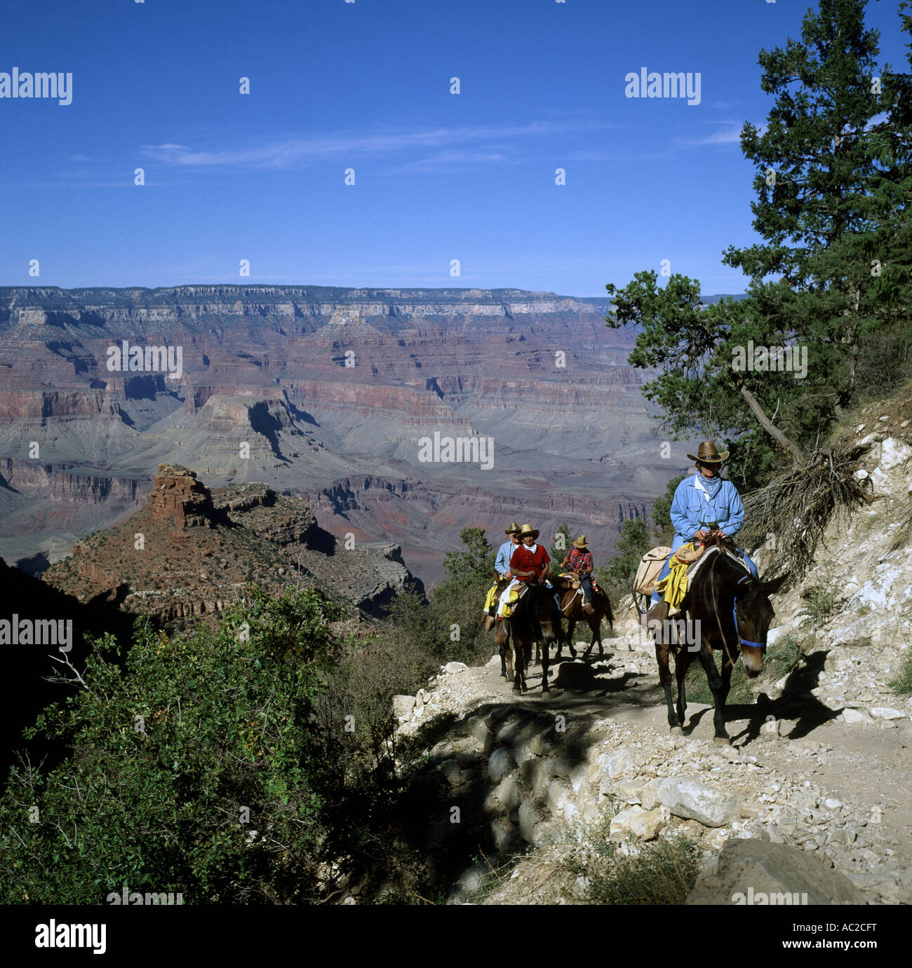 Mule Train sur Bright Angel Trail, Grand Canyon, Arizona, USA Photo Stock
