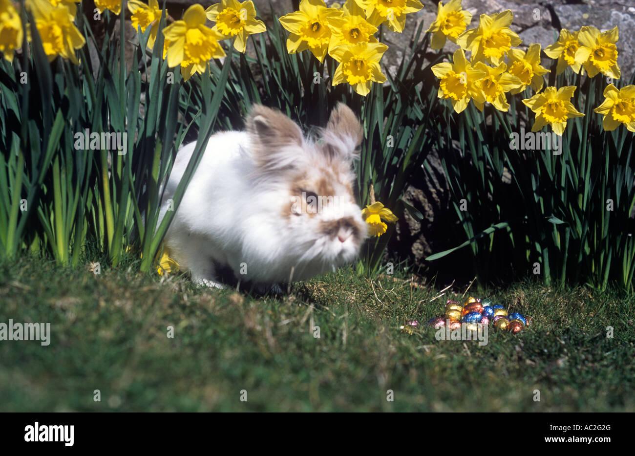 Lapin de Pâques! Photo Stock