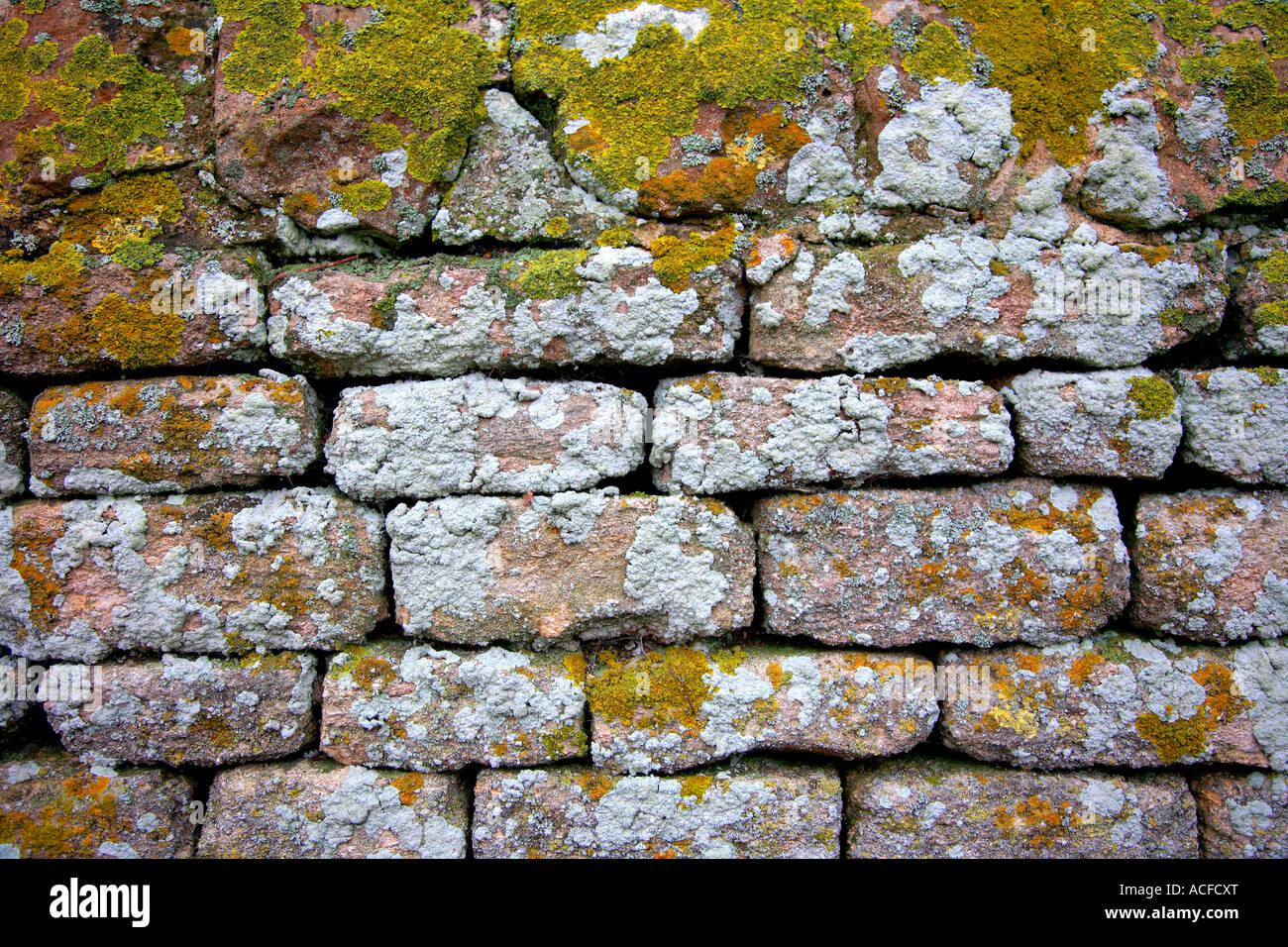 Détail du mur de pierres sèches patens Lichen briques texture Photo Stock