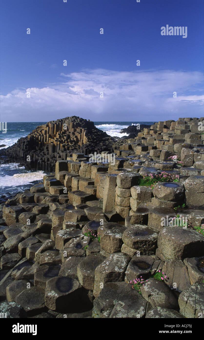 L'économie de plus en plus parmi les colonnes hexagonale de la Giant's Causeway, Co Antrim, en Irlande du Nord. Banque D'Images