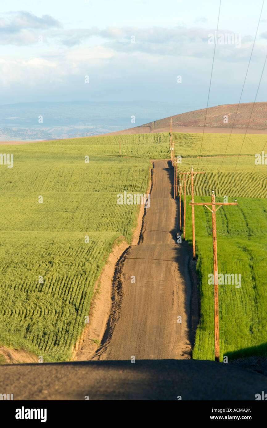 Route de campagne vallonnée, blé et orge. Photo Stock