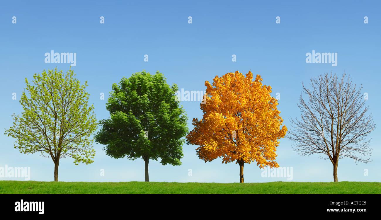 4 saisons arbre Baum 4 Jahreszeiten Photo Stock