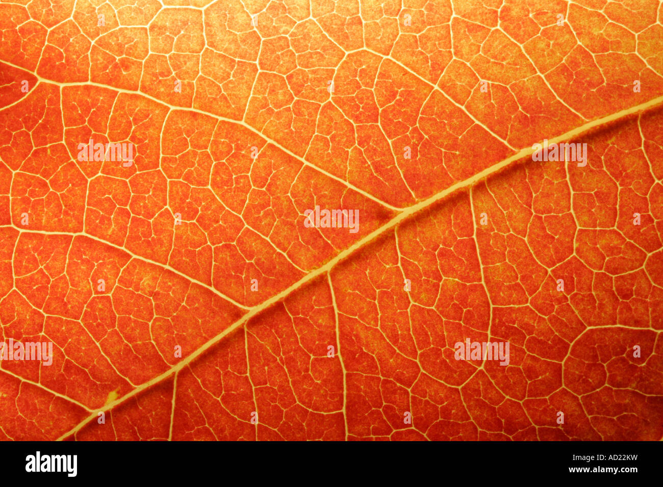 Macro d'une feuille de couleur à l'automne Photo Stock
