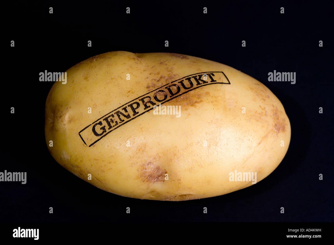 Une pomme de terre génétiquement modifiée Photo Stock