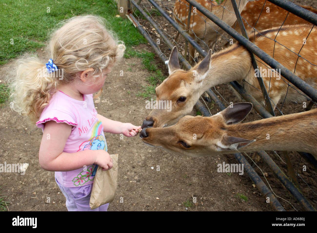 L'alimentation d'une petite fille dans un parc de cerfs sauvages. Photo Stock