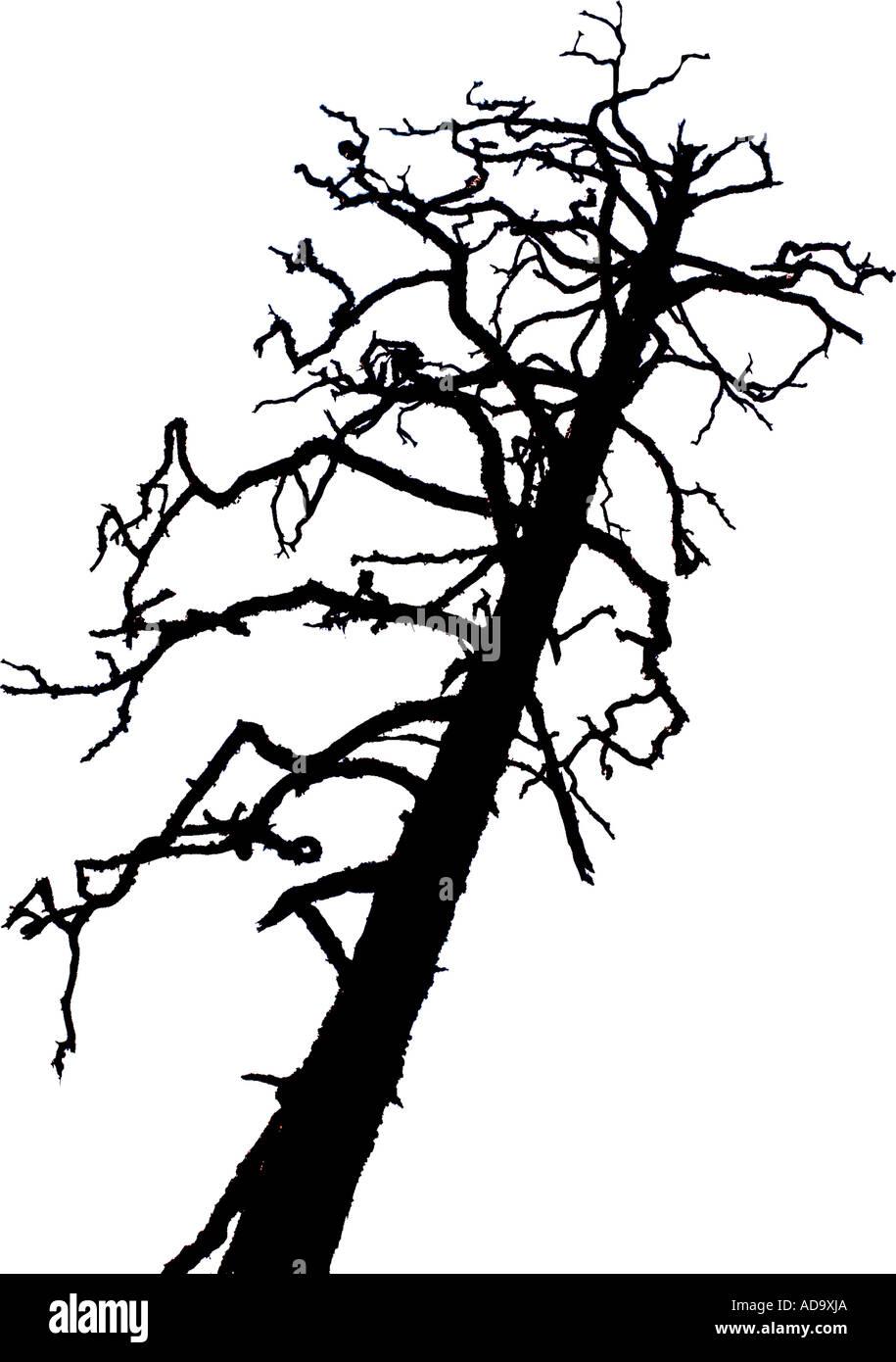 Silhouette en noir et blanc d'un des arbres morts sur pied Photo Stock