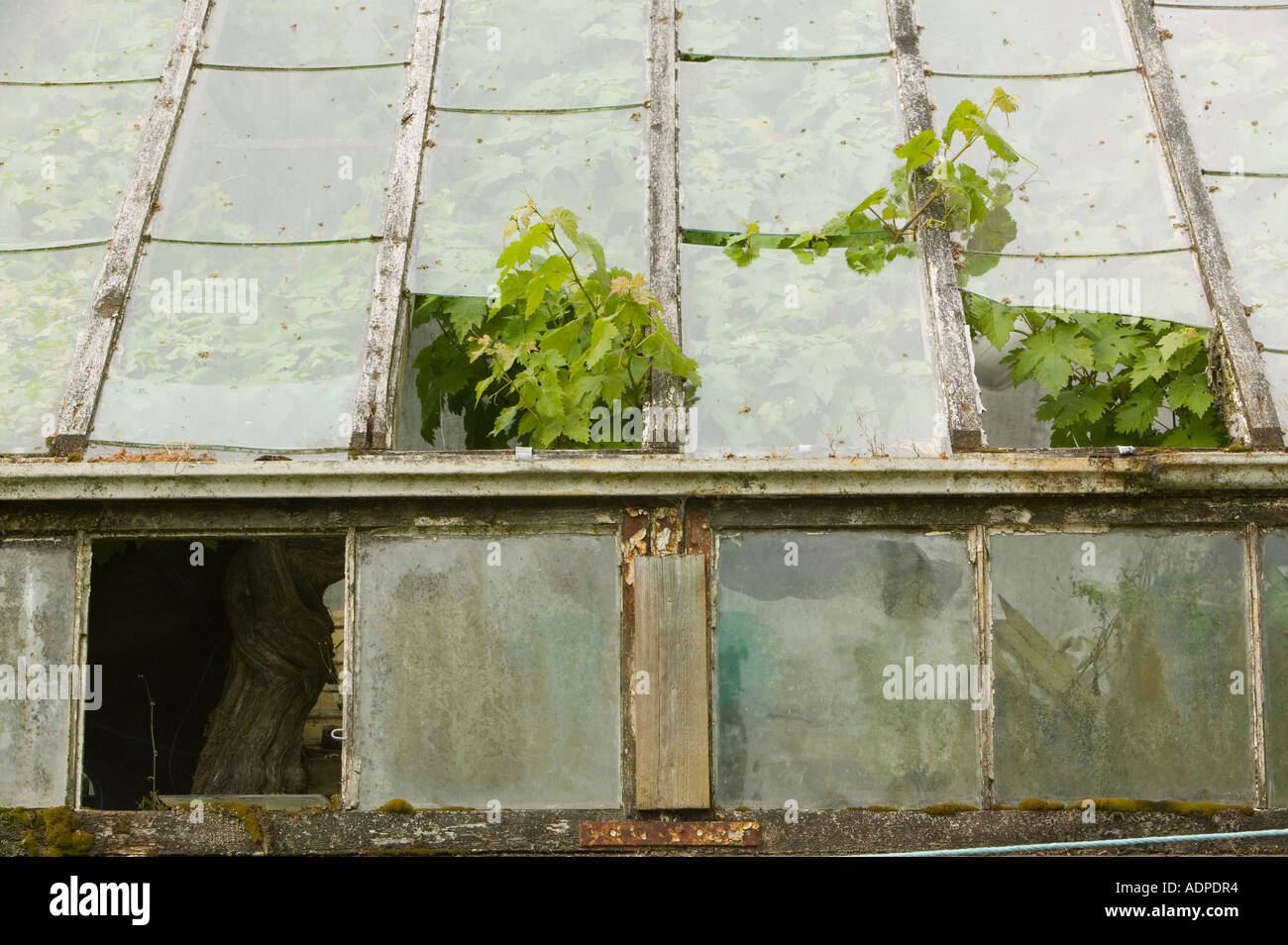 Green House victorienne s'effondrer de Trevarno Gardens, Cornwall, UK Banque D'Images