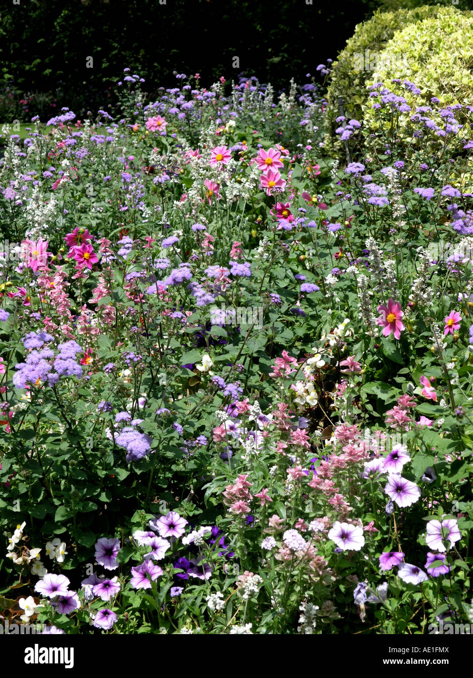 Emejing Nantes Jardin Des Plantes Fleur Pictures - House Design ...