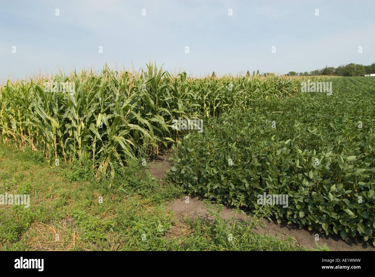 L'agriculture du Minnesota le maïs et le soja sont les deux principales cultures du sud du Minnesota illustré Photo Stock