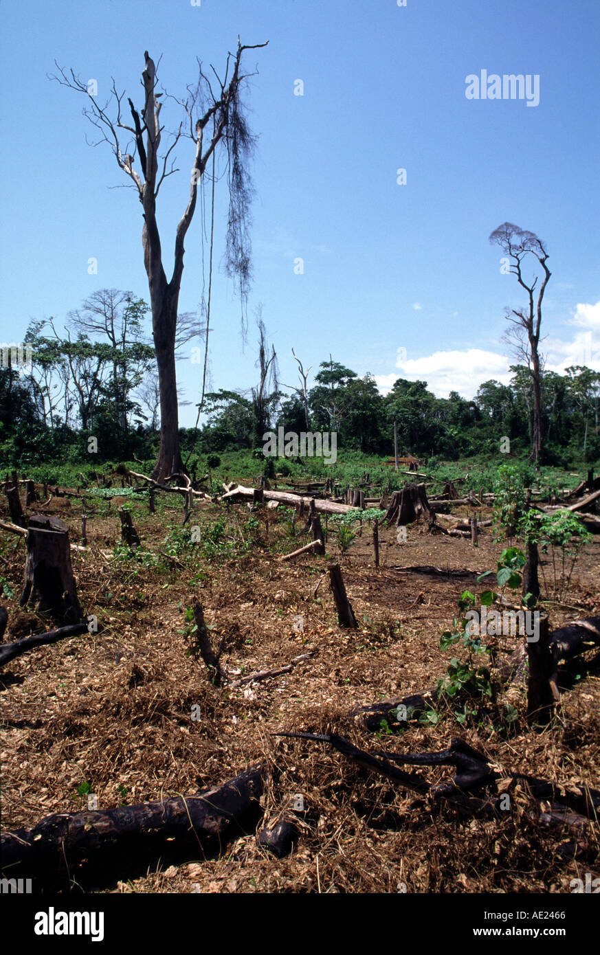 La déforestation, la Côte d'Ivoire Photo Stock