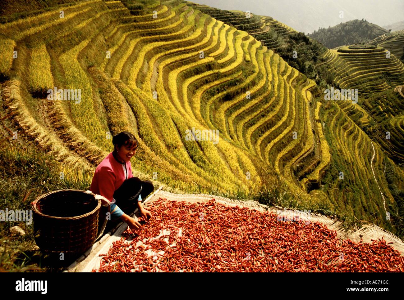 Yao rouge femme nationalité poivrons tri au champs près de Pingan Longji terrasse village près de Guilin dans le comté de Longsheng, Guangxi, Photo Stock