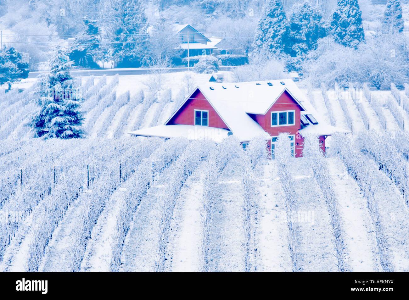 Sokol Blosser vignobles avec neige et brouillard farm house l'Oregon Photo Stock