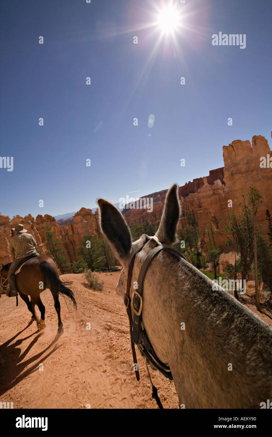 Cheval et cavalier dans la mule formations hoodoo à Bryce Canyon National Park Utah Photo Stock