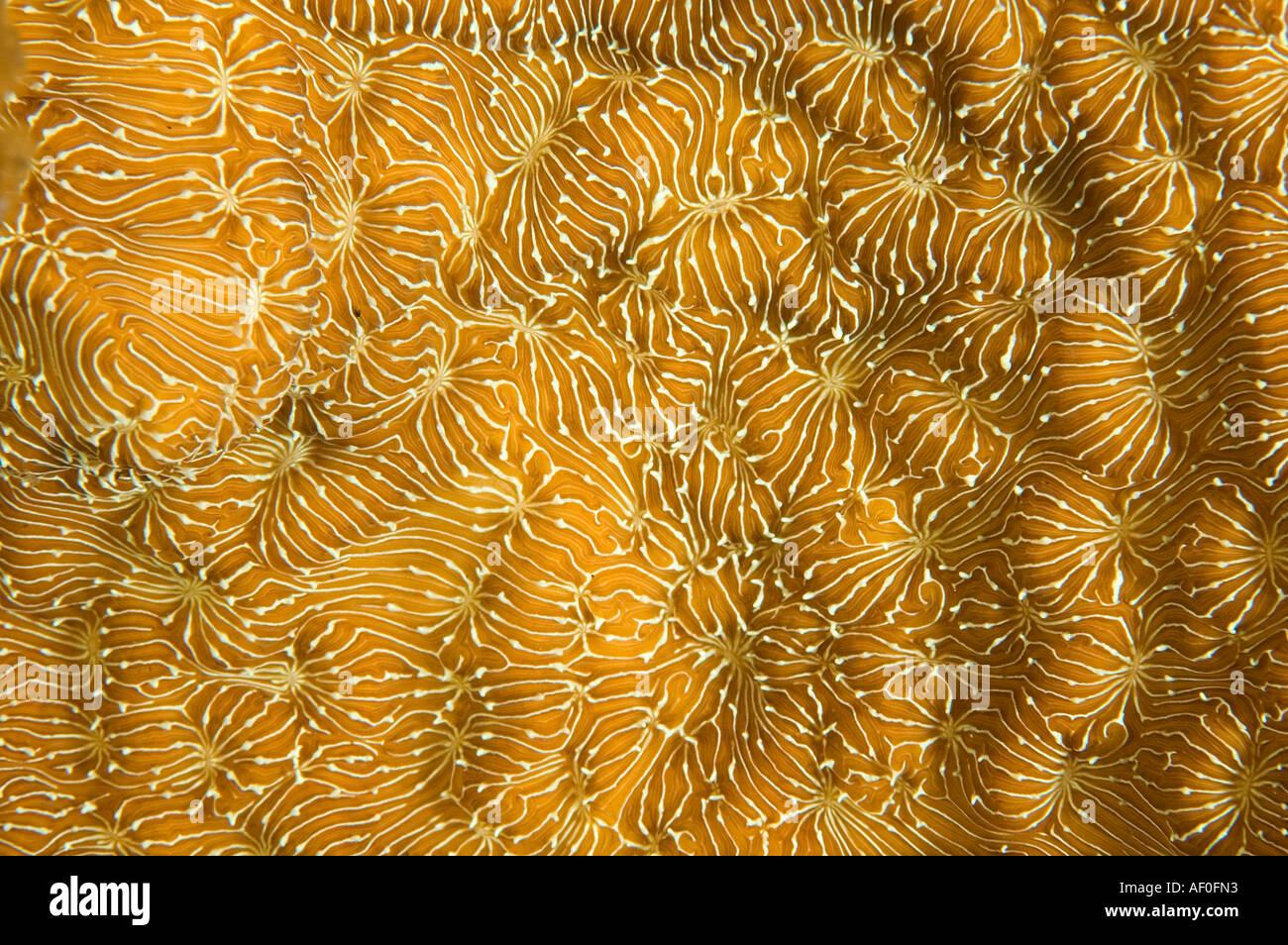Détails d'une texture de coraux durs, Bali Indonésie. Photo Stock