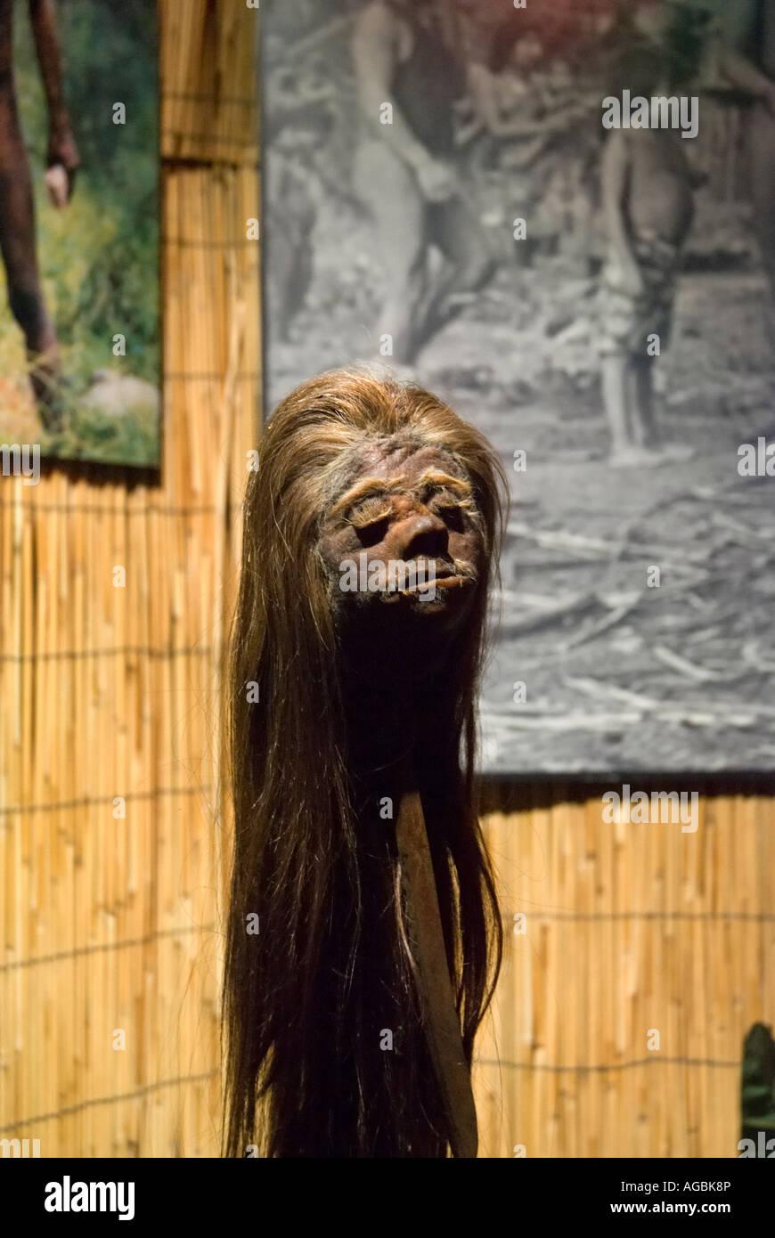 Tête humaine ratatinée Ripley s Believe It Or Not Museum St Augustine en Floride Photo Stock