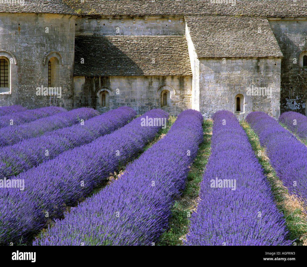 FR - PROVENCE: Abbaye de Sénanque dans le Luberon Photo Stock