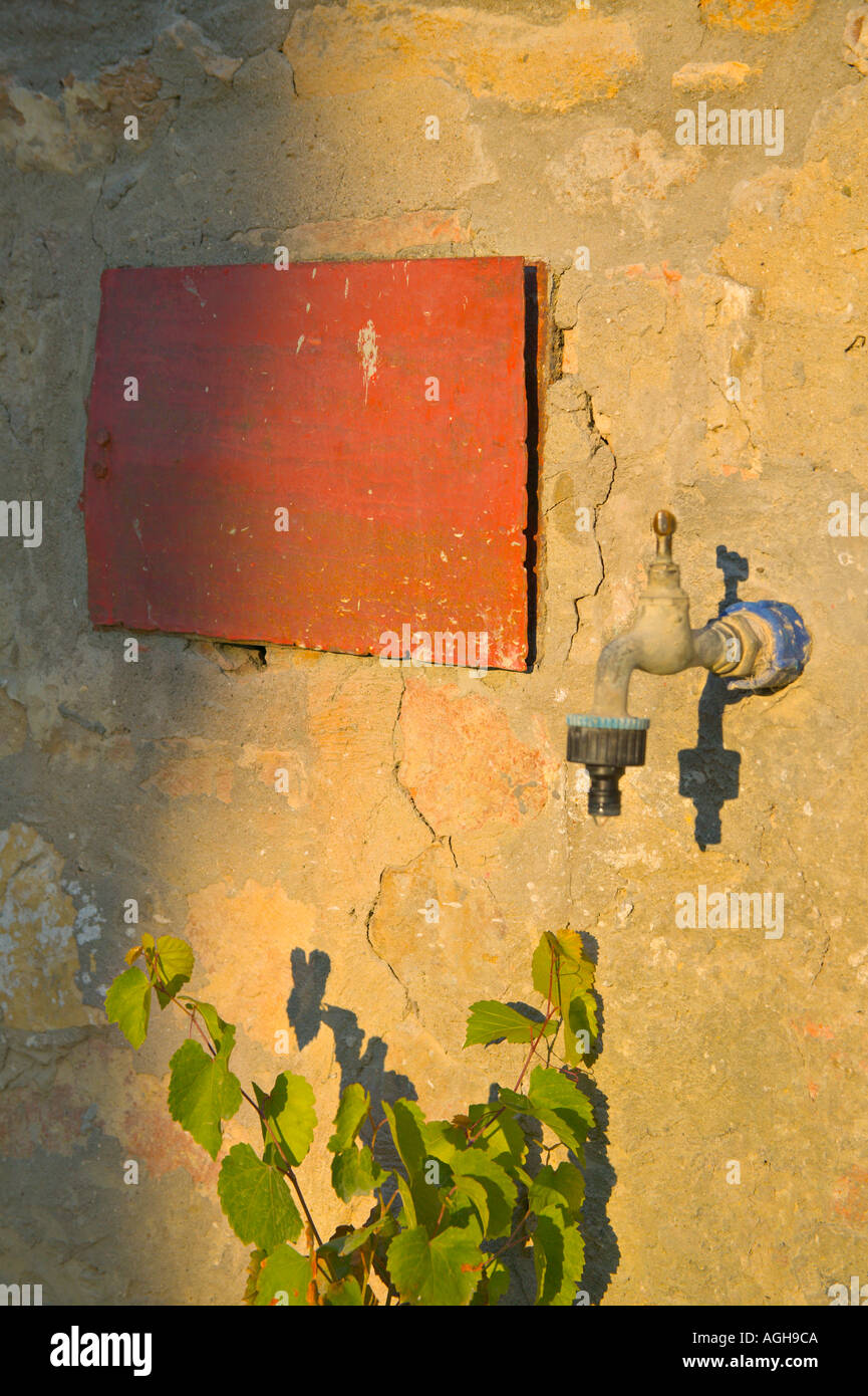 Appuyez sur un mur de la Toscane avec le rectangle rouge et plante, éclairé par la lumière du soir, Casa Alle Vacche, Toscane, Italie Banque D'Images