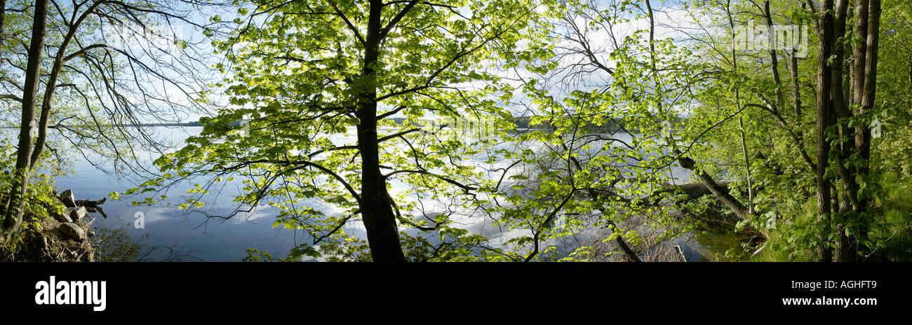 Vue sur la forêt et lac, Suède Photo Stock