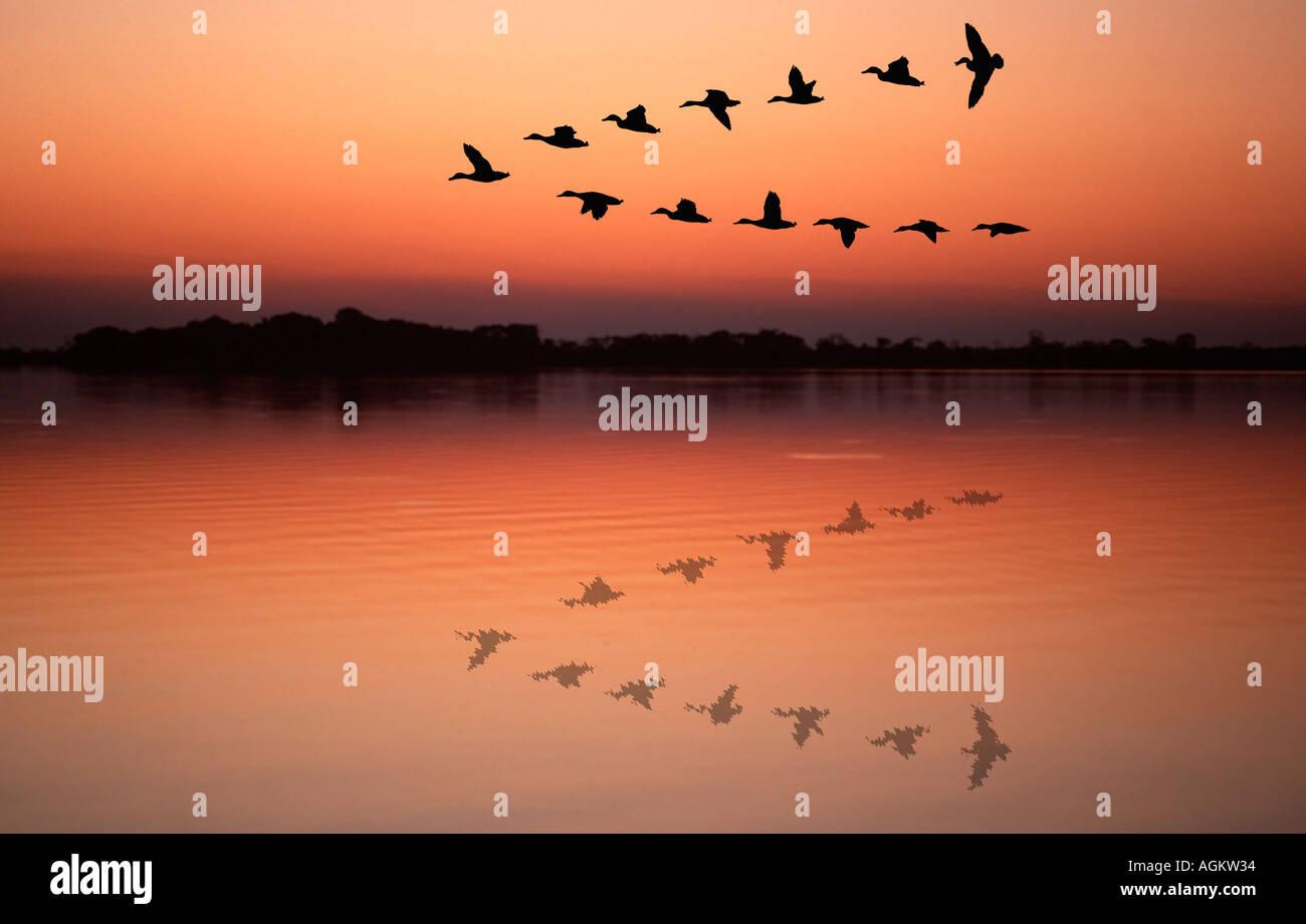 Canards volant en formation v reflète dans Lake dans le coucher du soleil Photo Stock