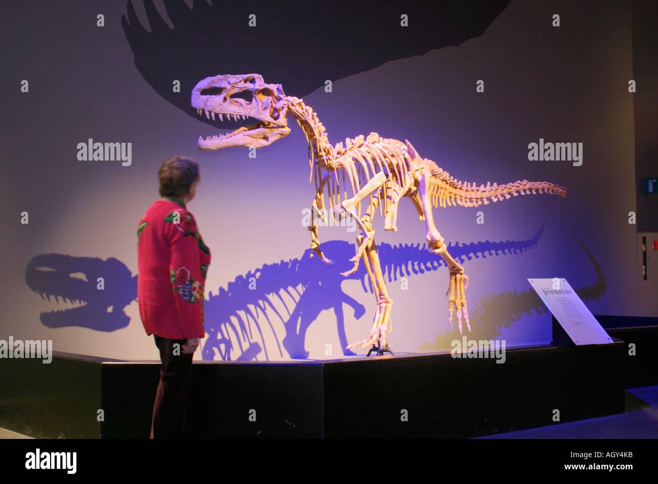 L'étude de combustibles terminé touristique principal cast de Tyrannosaurus Rex au Royal Tyrrell Museum Photo Stock
