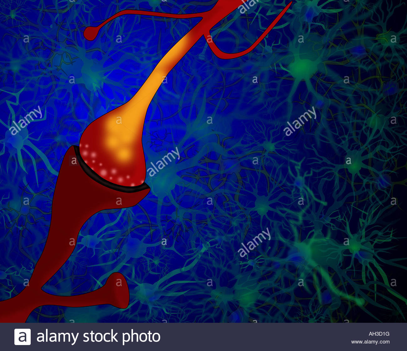 Illustration d'une synapse entre l'axone d'un neurone présynaptique et la dendrite d'un neurone Photo Stock