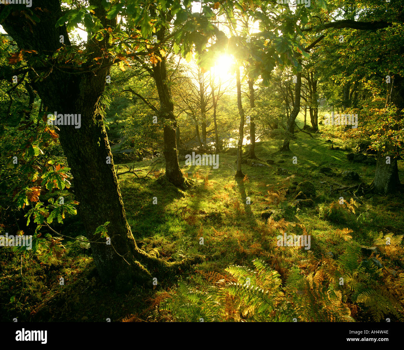 Gb - Pays de Galles : le parc national de Snowdonia forest Photo Stock