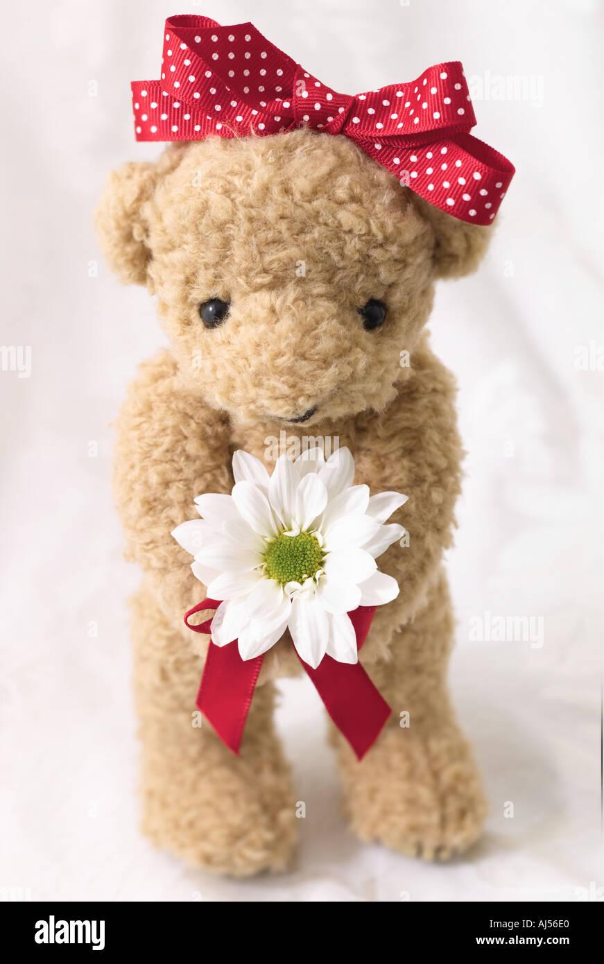 Valentin ours avec Daisy Photo Stock
