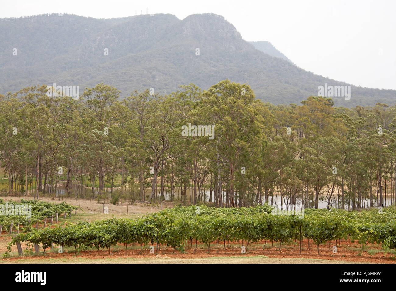 Les montagnes et les arbres à proximité de la gencive est cassé en Hunter Valley zone viticole de la Nouvelle Galles du sud , Australie Banque D'Images