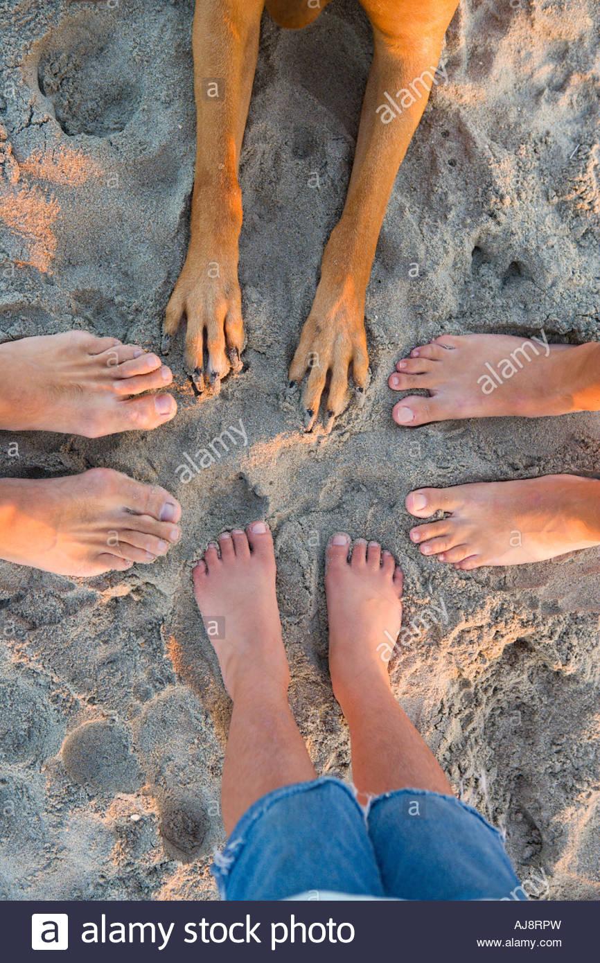 des pieds et des pattes