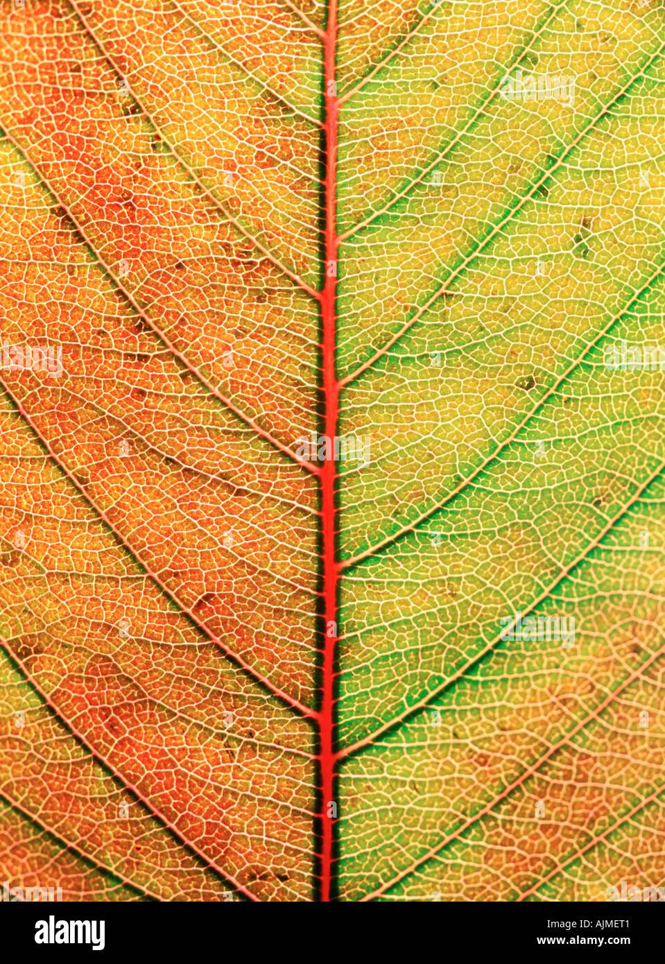 Close up of autumn leaf Photo Stock