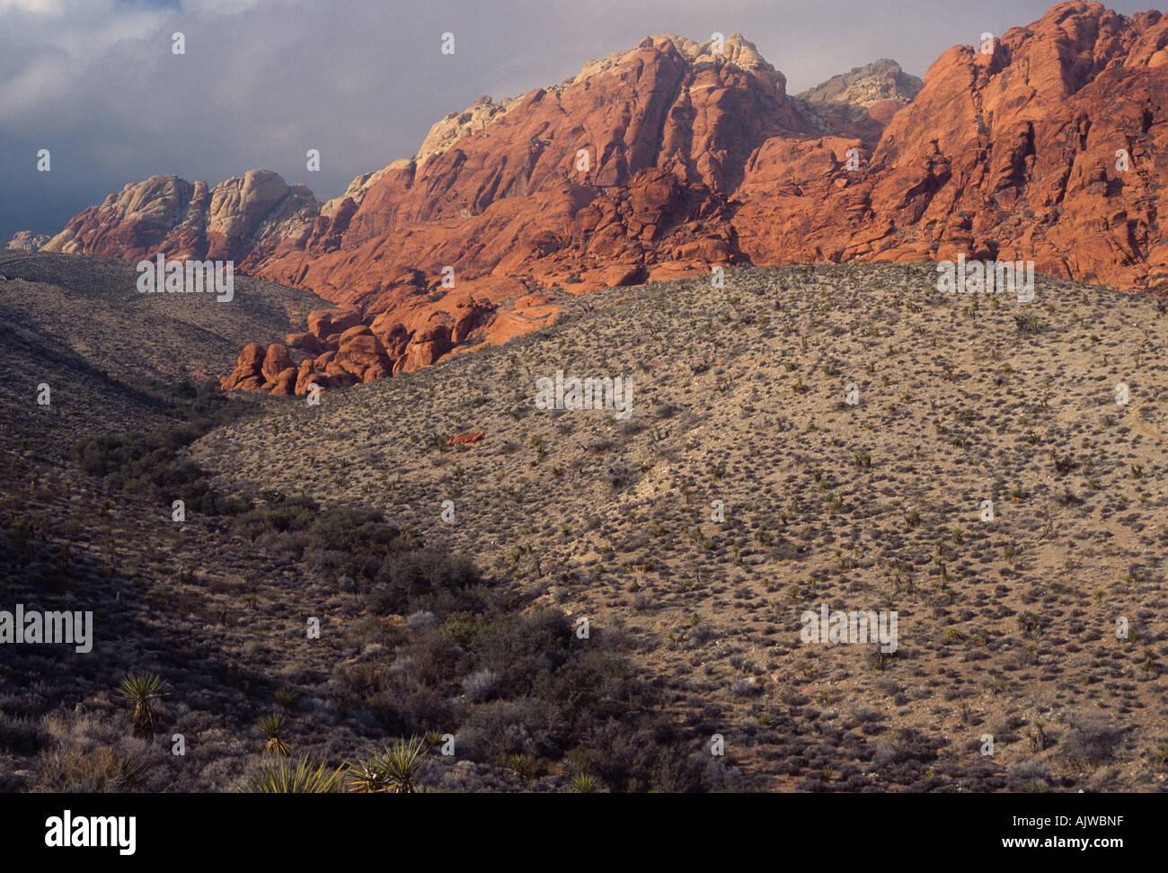 Désert de Mojave ravin avec le grès rouge et gris des formations calcaires, Red Rock Canyon National Conservation Banque D'Images
