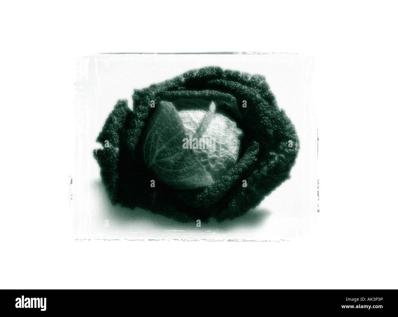 Moody avec chou monochrome granuleuse type polaroid frame Photo Stock