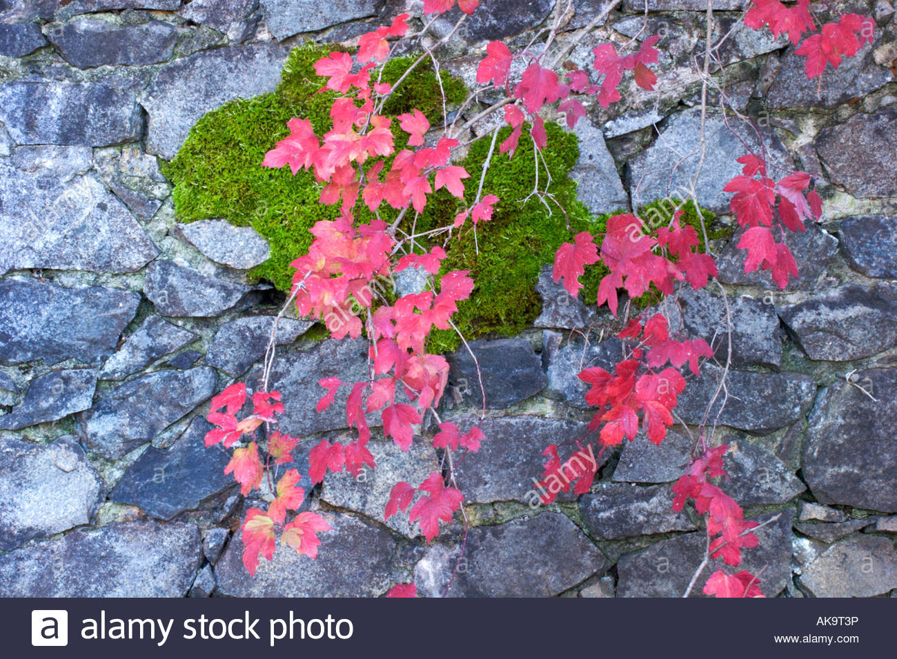 L'automne les feuilles rouges contre mur brique Mine Empire State Historic Park Grass Valley en Californie Photo Stock