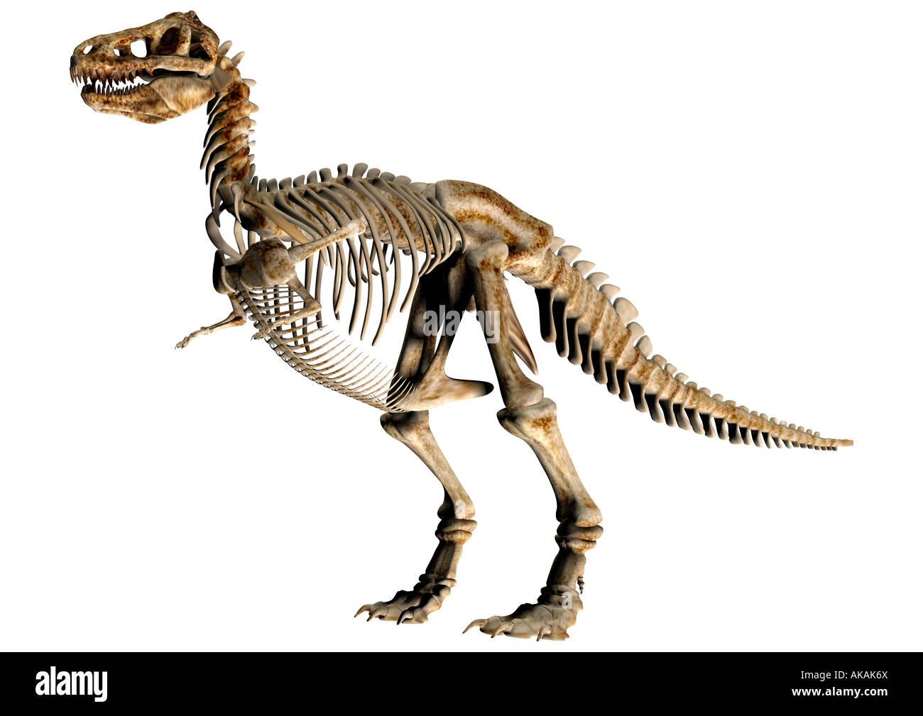Squelette de dinosaure Dinosaurier Feststellung Photo Stock