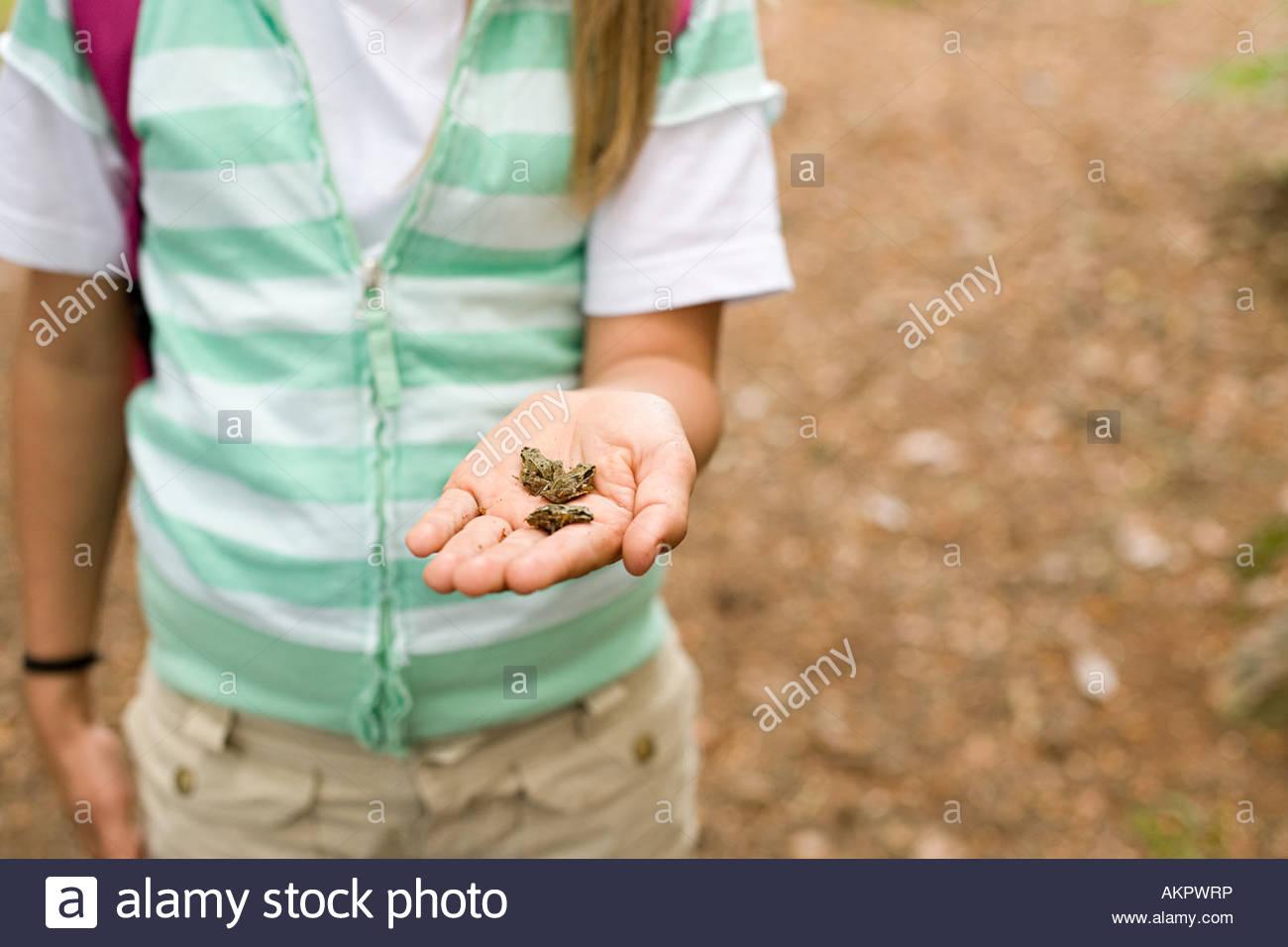 Girl holding de minuscules grenouilles Photo Stock