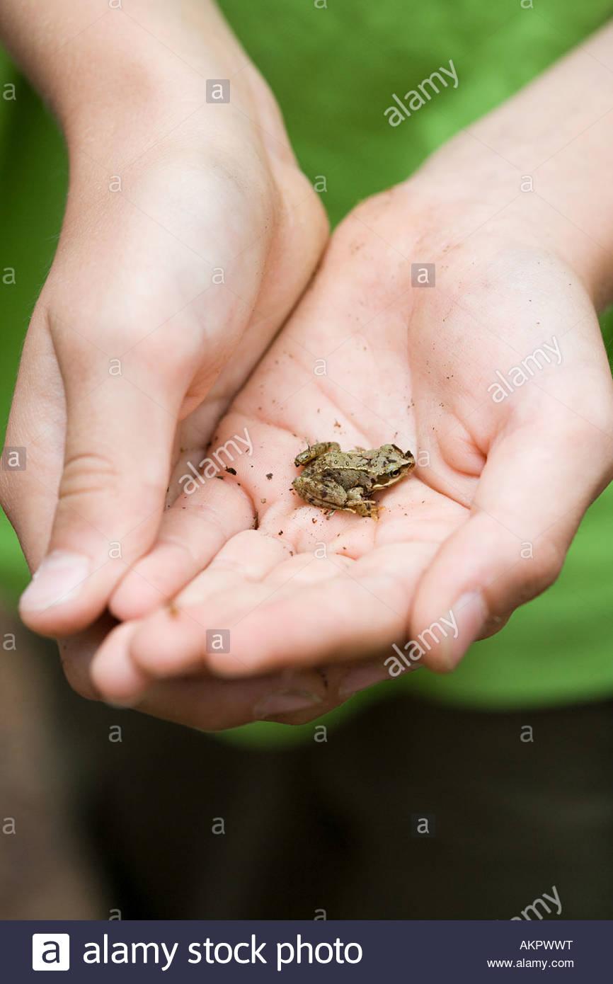 Enfant tenant une petite grenouille Photo Stock