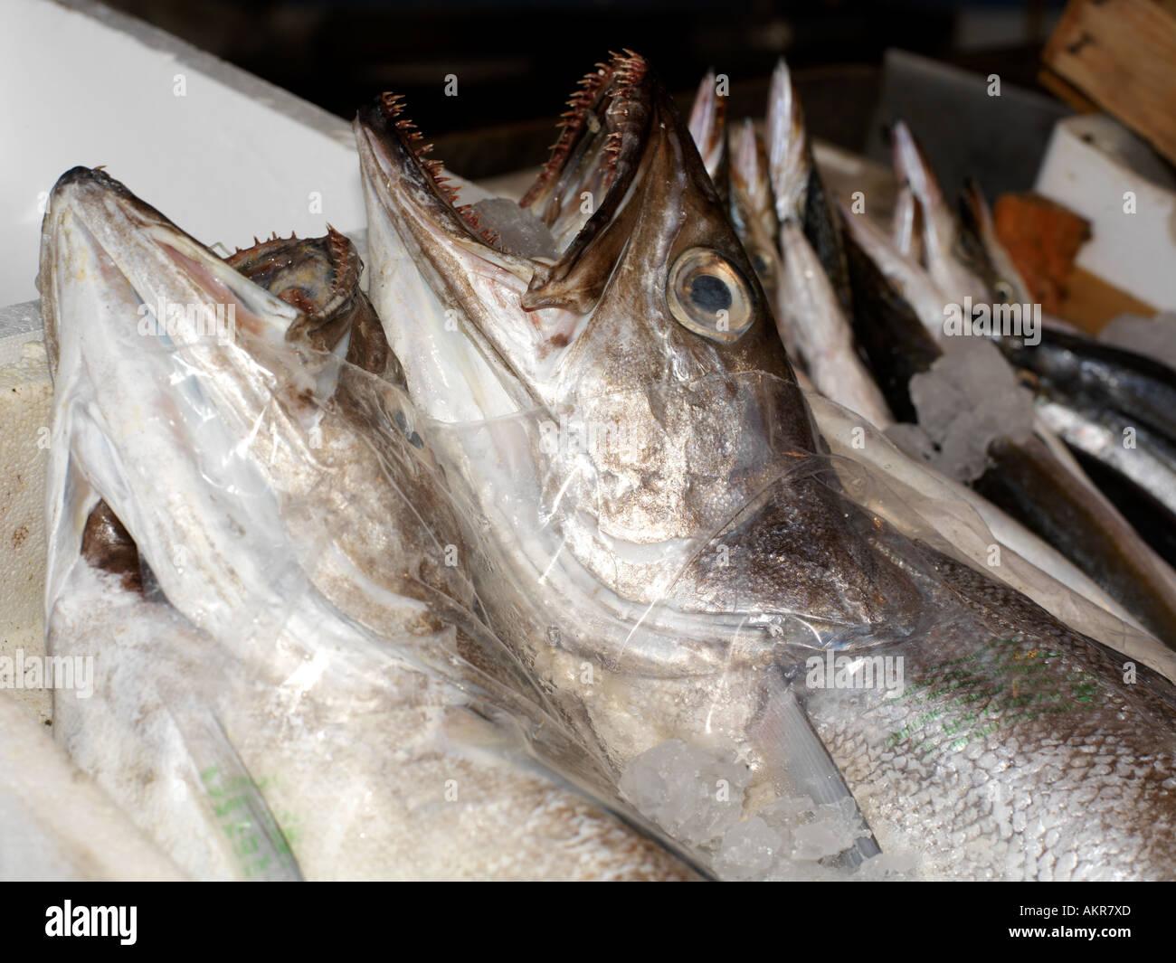 Sicile Italie Fish Market à Porticello Cod Banque D'Images