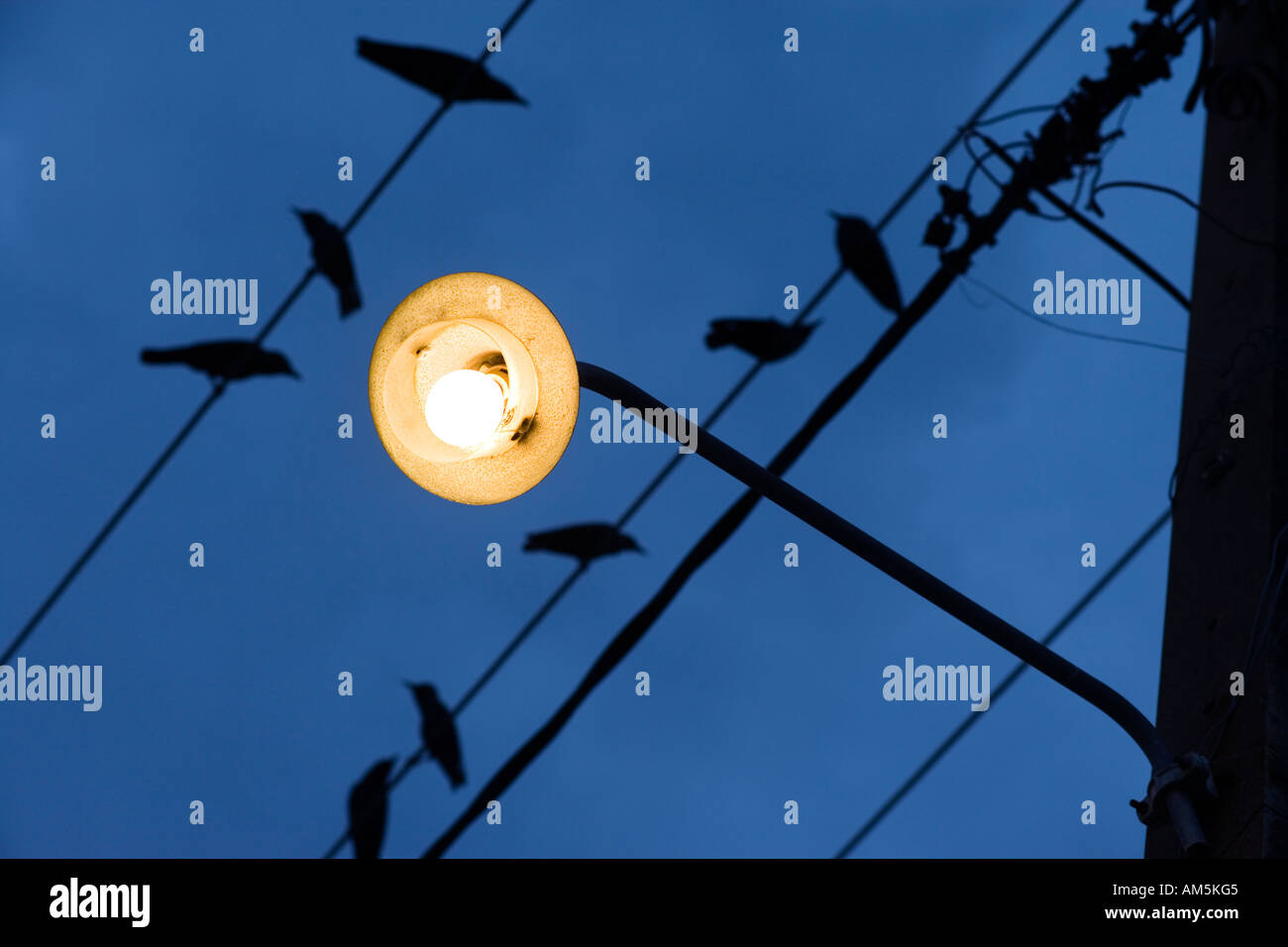 Oiseaux sur un fil. Lampadaire jaune contre un ciel bleu foncé. Photo Stock