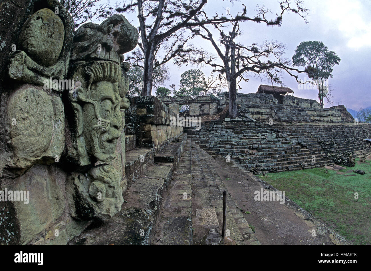 Maya de Copan, Honduras, Cryptes, Royal,dieu Jaguar Photo Stock