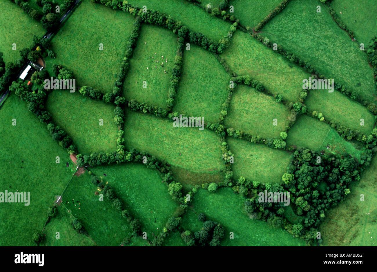 Des champs verts de l'Irlande Banque D'Images
