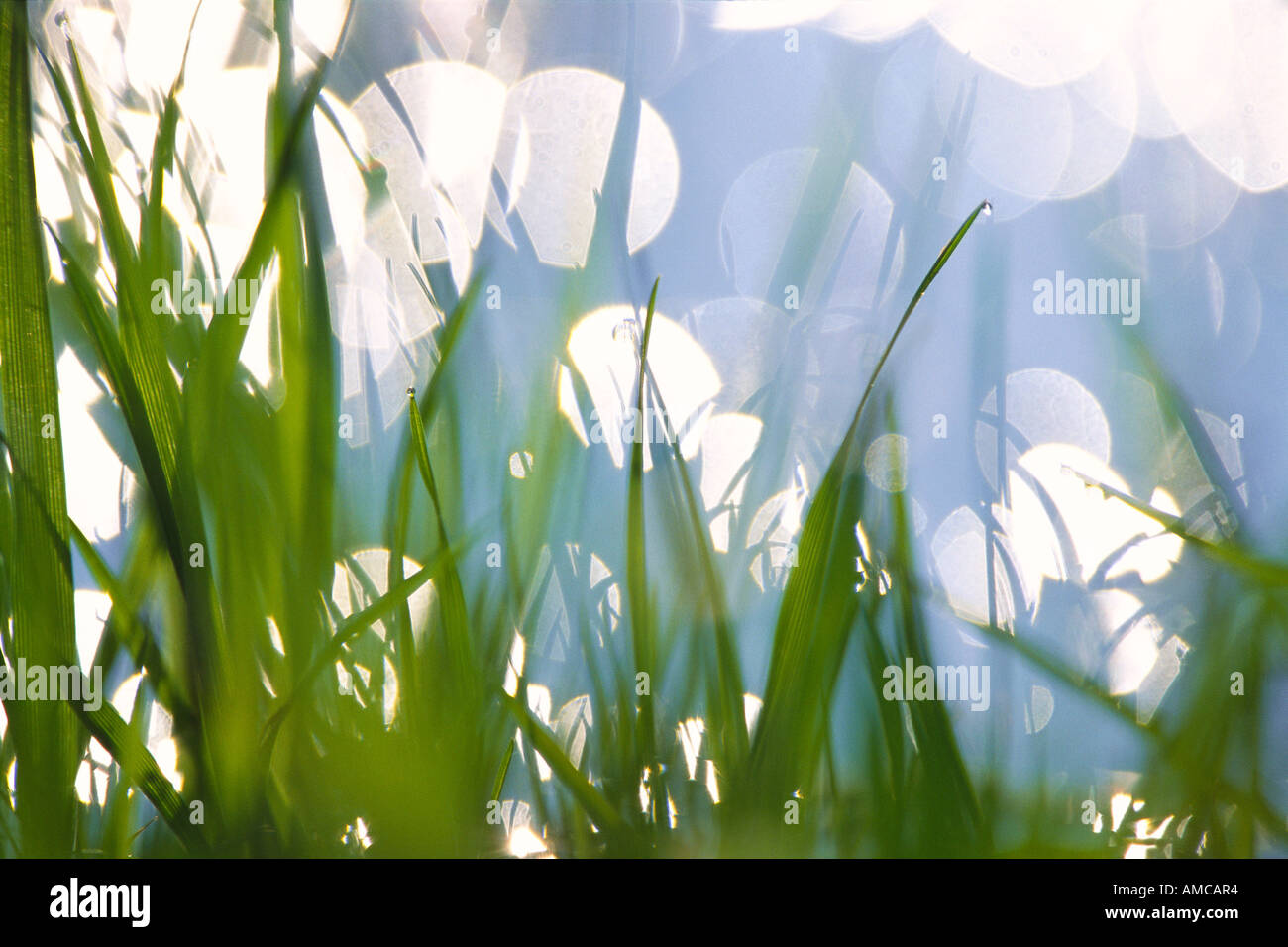 Grass Banque D'Images