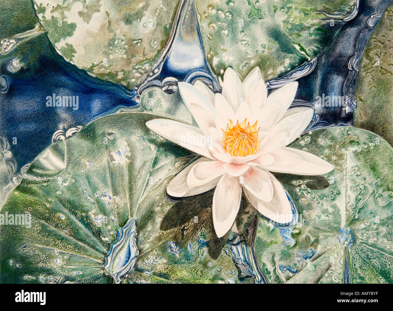 Dessin Au Crayon De Couleur Fleur Waterlilly Banque D Images Photo